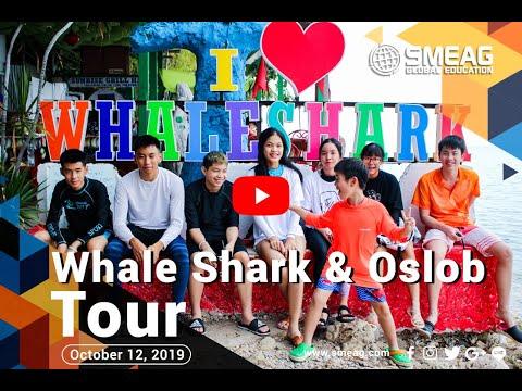[フィリピン 英語 留学] SMEAG 語学学校 / 短期留学 : Whale Shark & Oslob Tour 10-12-19